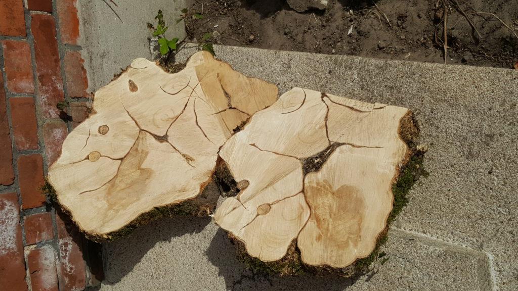 Kunst aus dem Baum (für Mimi)